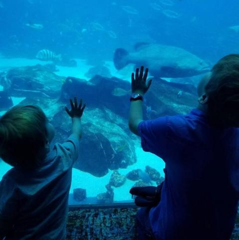The Best Georgia Aquarium Thanksgiving