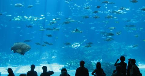 The Best Georgia Aquarium Thanksgiving